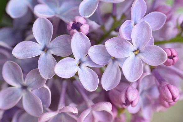 цветя и зодии