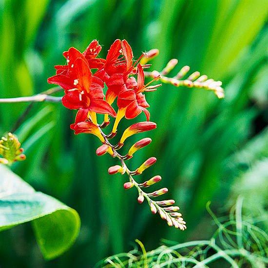 gradinski cvetq za lqtoto