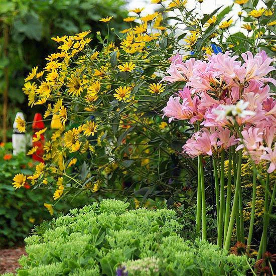 летни цветя за градината