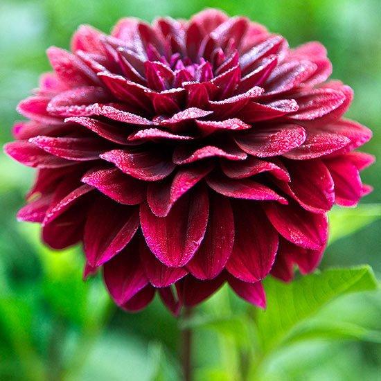 letni cvetq za gradinata