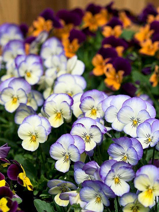 Сенчестолюбиви цветя за градината и двора