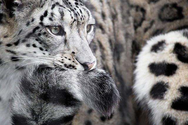 снимки на животни