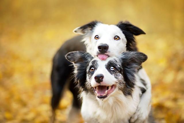 Снимки на кучета