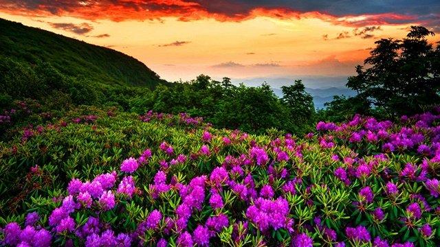 Пролетни пейзажи