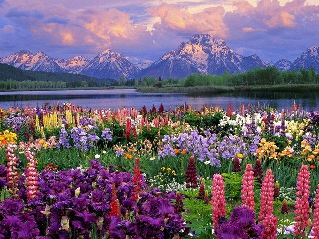 peizaji s cvetq za proletta