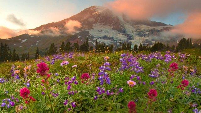 proletni peizaji s cvetq i planina