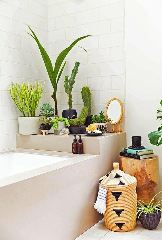 kak da otglejdame kaktusi