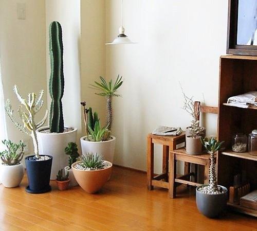 otglejdane na kaktusi