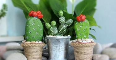 otglejdane-na-kaktusi-6