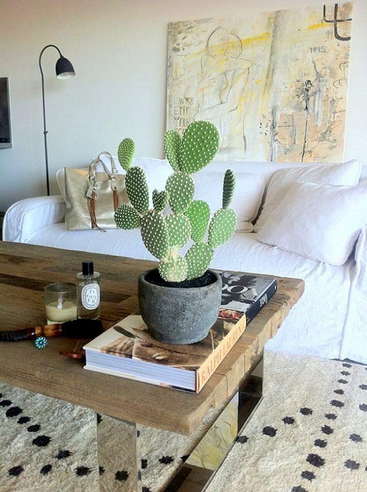kaktusi otglejdane