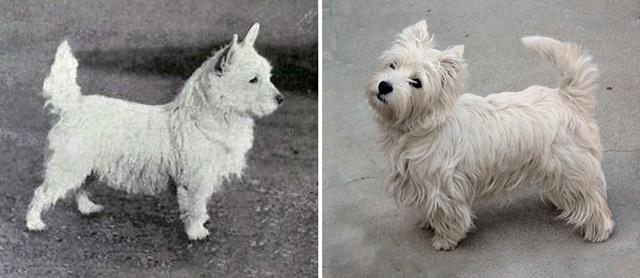 породи кучета