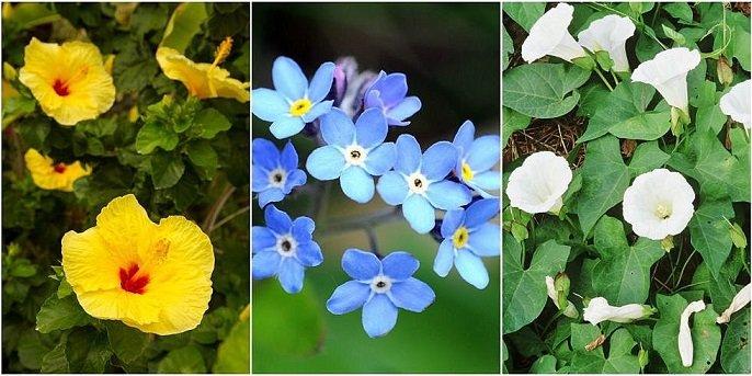 7 красиви тревисти растения, които съсипват градината