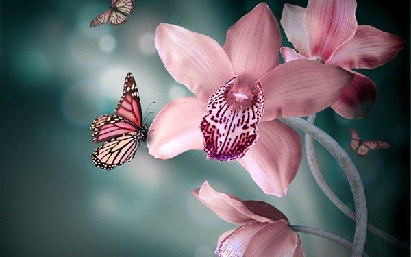 картинки за цветница