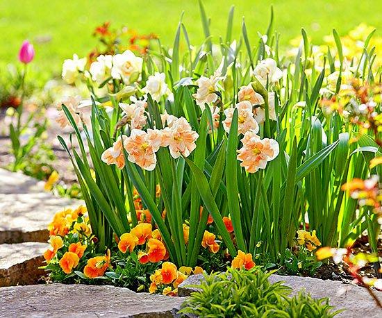 Пролетни цветя – какво и как да засадим през пролетта?
