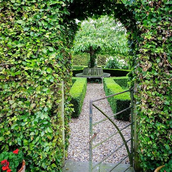 моята градина