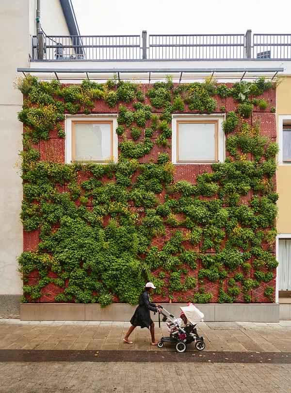 green wall zelena stena rasteniq