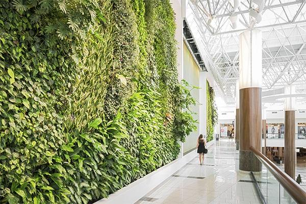 zeleni steni s mnogo rasteniq
