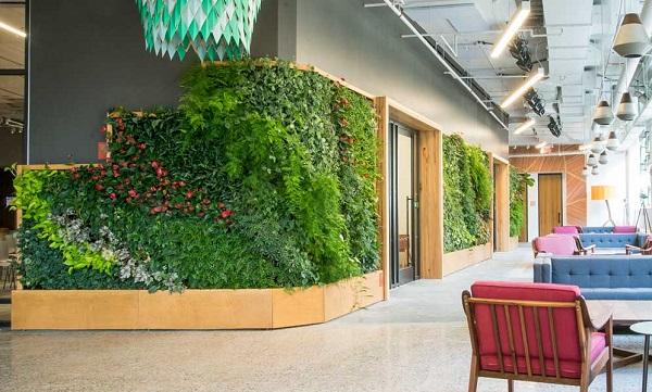 zelena stena s rasteniq