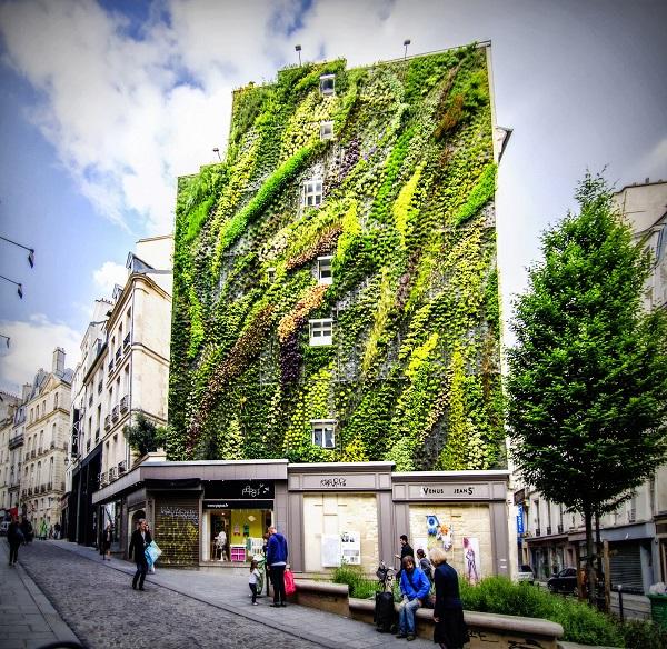 zelena stena na sgrada s rasteniq
