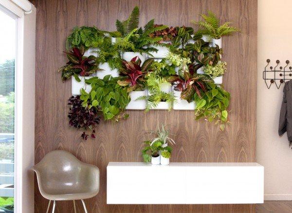 krasiva zelena stena s rasteniq