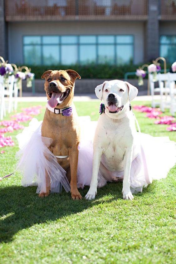 kucheta na svatba