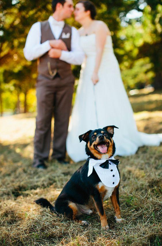 zabavni snimki na kucheta na svatba