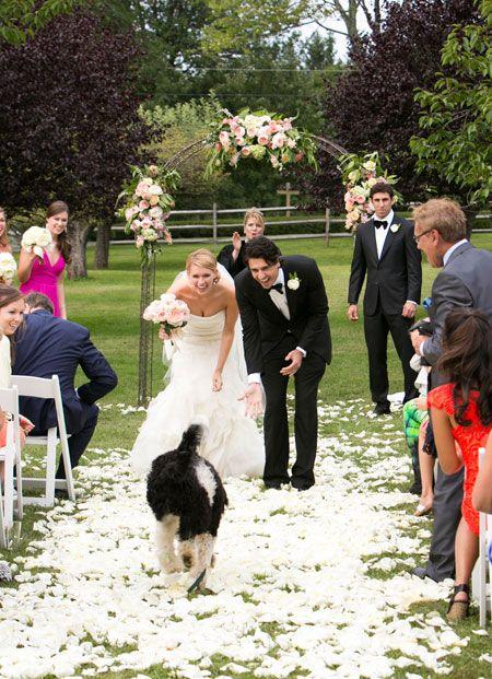 Как кучето да бъде част от сватбата ни?
