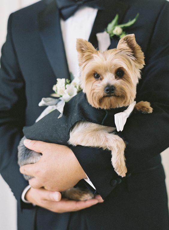 kuche yorki na svatba