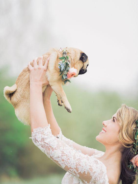 kuche mops na svatba