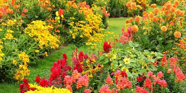 есенни цветя
