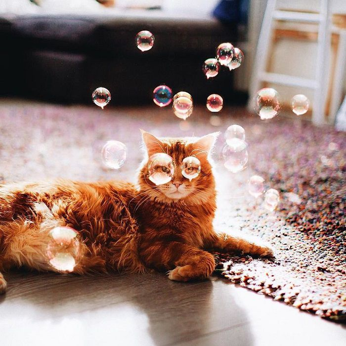 Интересният живот на една котка модел