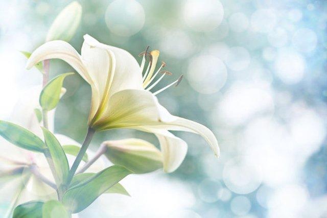 Съновник: Цветя