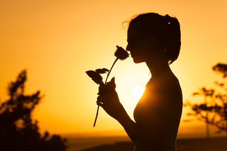 съновник рози