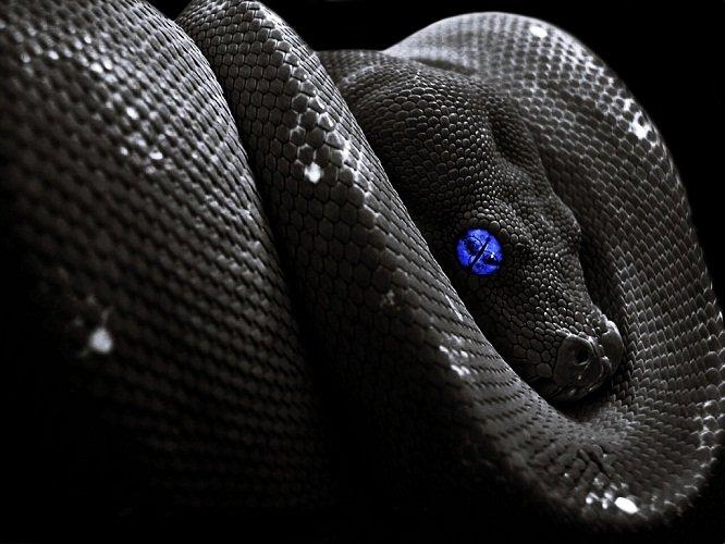 съновник змии