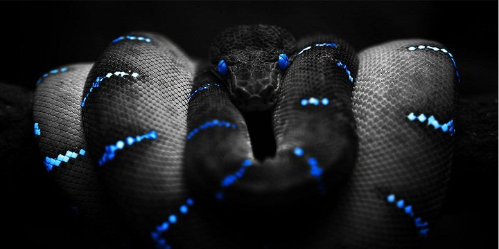 sunovnik zmii